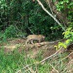 Pantanal Ecoverde Tours Foto