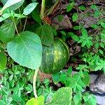 The Pahadi Organic Photo