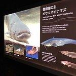 Photo of Lake Biwa Museum