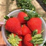 صورة فوتوغرافية لـ Redberry Farm