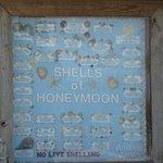 No live shelling!