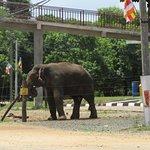 Foto de Somawathie Chaitiya Sanctuary