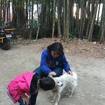 Bamboo Grove Retreat Photo