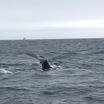 Photo of 7 Seas Whale Watch
