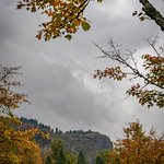 Gray clouds provide background for fall foliage