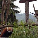 Parc Animalier Des Pyrénées Foto