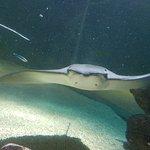 National Sea Life Centre fényképe