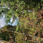 Foto de Delaware Water Gap National Recreation Area