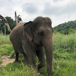 Photo of Hutsadin Elephant Foundation