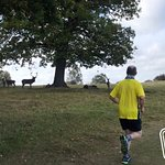 Keeping the local wildlife at a safe distance, Windsor Great Park, United Kingdom.