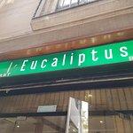 Photo de L'eucaliptus