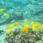 Photo de Adventures in Paradise Kayak & Snorkel