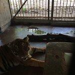 Foto de Zoobic Safari