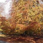 صورة فوتوغرافية لـ Hulne Park