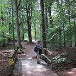 Fontins Naturreservat Photo
