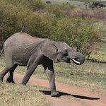 ภาพถ่ายของ Bencia Africa Adventure & Safaris