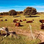 Foto van Agricampeggio Elighes Uttiosos