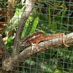Bild från Viveiro, Botanical Garden & Zoo di Terra