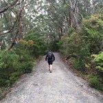 Mt Oberon Summit Walk Image