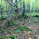Photo de Riserva Naturale Zompo lo Schioppo