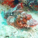 Photo of Octopus Diving Center