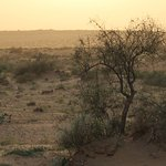 Photo of Thar Desert