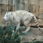 Foto de Nanning Zoo