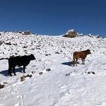 Foto de Las Encinillas Rutas a Caballo