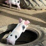 Photo de Godstone Farm & Playbarn