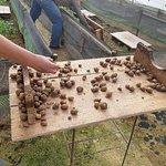 Fotografia de Portugal Farm Experiences