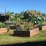 Kahuku Farms Foto