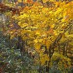 Zdjęcie Kaminaridaki Falls