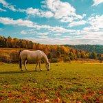 Foto de Vermont Farm Tours