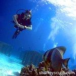 Photo of Sharkey Scuba