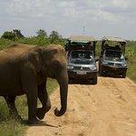 Foto di Udawalawe Trails
