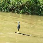 Foto Monkey River Eco Tours