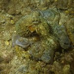 Under Hundred Diving resmi