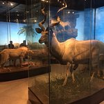 Photo of The Houston Museum of Natural Science