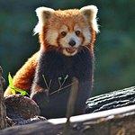 Bild från Seneca Park Zoo