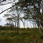 Foto van Nationaal Park Duinen van Texel
