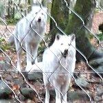 Photo of La Maison des Loups