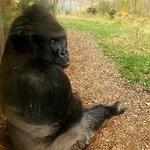 Valokuva: Henry Doorly Zoo