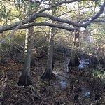 Φωτογραφία: Back Bay National Wildlife Refuge