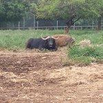 Foto de Kisumu Impala Sanctuary