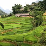 Rice terraces just below Sapa town.