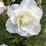 Foto de Berkeley Municipal Rose Garden