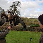 Walks With Hawks Foto