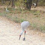 Lee G. Simmons Conservation Park and Wildlife Safari-billede