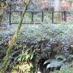 Bilde fra Gortin Glen Forest Park