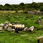 Foto di Caherconnell Stone Fort